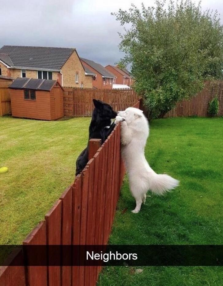 Dog - Neighbors