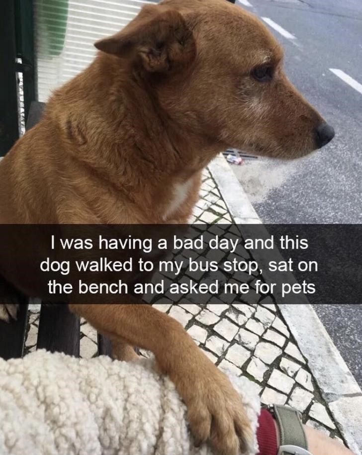Dog - I was having a bad day and this dog walked to my bus stop, sat on the bench and asked me for pets