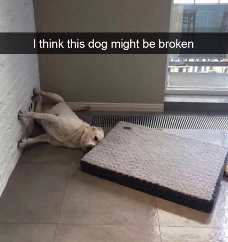 Floor - I think this dog might be broken