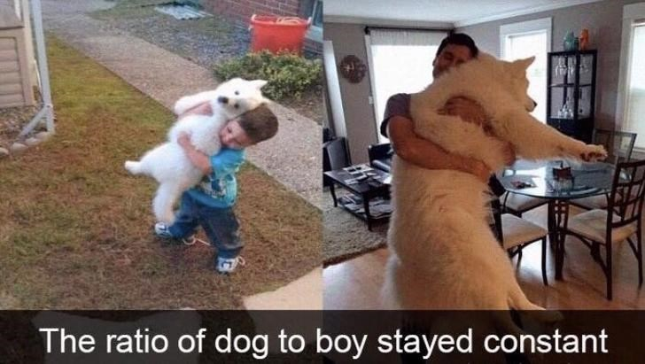 Photo caption - The ratio of dog to boy stayed constant