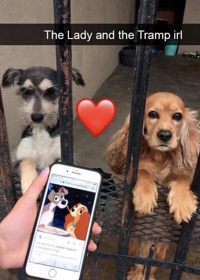 Dog - The Lady and the Tramp irl ges
