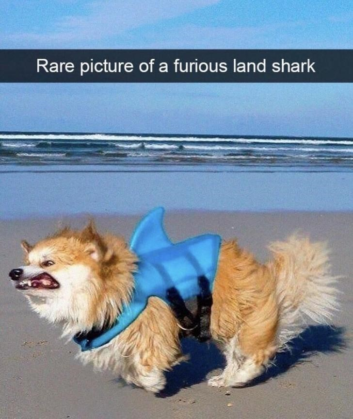 Dog - Rare picture of a furious land shark