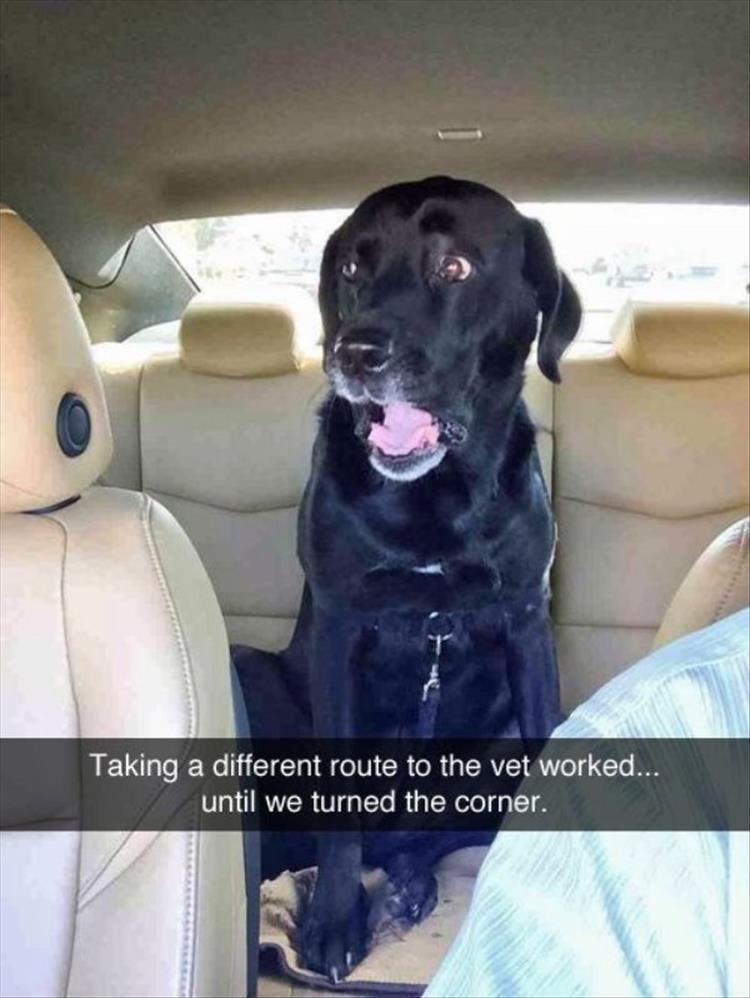 dog memes - 9361810688