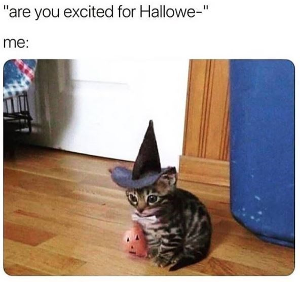 "Cat - ""are you excited for Hallowe-"" me:"