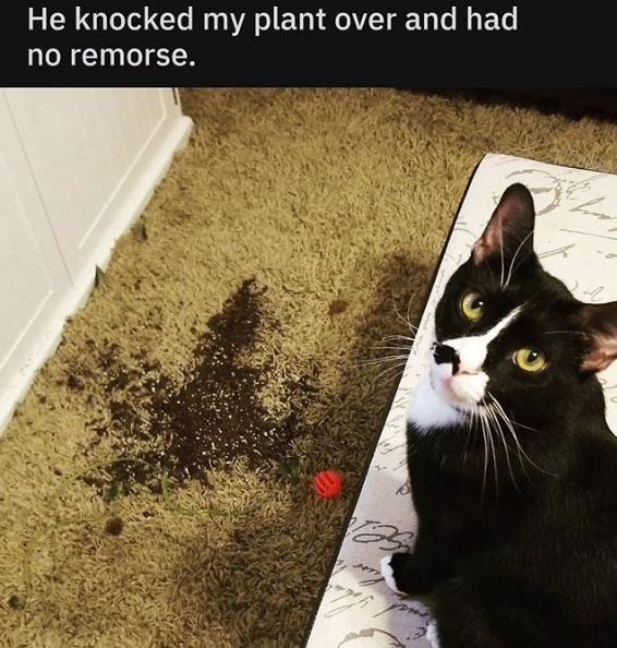 Cat - He knocked my plant over and had no remorse.