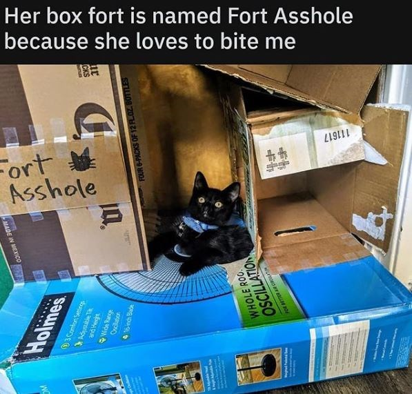 Cat - Her box fort is named Fort Asshole because she loves to bite me 111617 Fort Asshole MADE IN MEXIC0 3 Comfont Settirgs Ondlabo 416nch Bade FOUR 6-PACKS OF 12 FL0Z. BOTTLES WHOLE ROO OSCILLATION