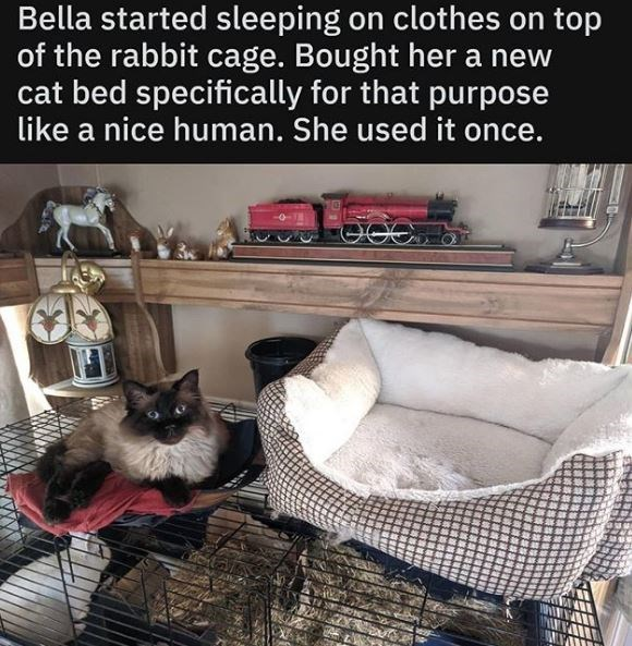 Cat - Bella started sleeping on clothes on top of the rabbit cage. Bought her a new cat bed specifically for that purpose Like a nice human. She used it once.