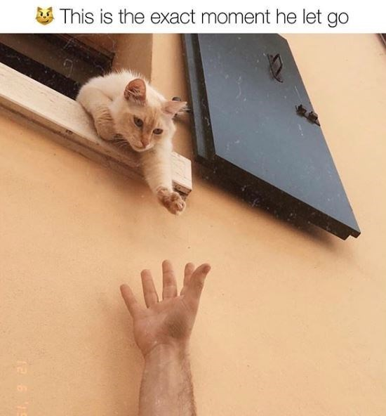 Cat - This is the exact moment he let go 12