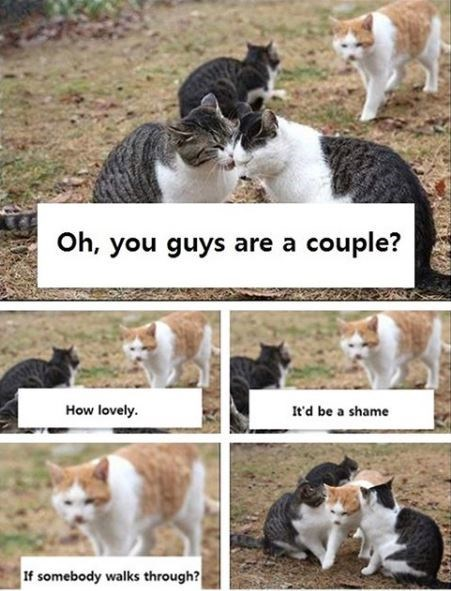 Cat - Oh, you guys are a couple? How lovely. It'd be a shame If somebody walks through?