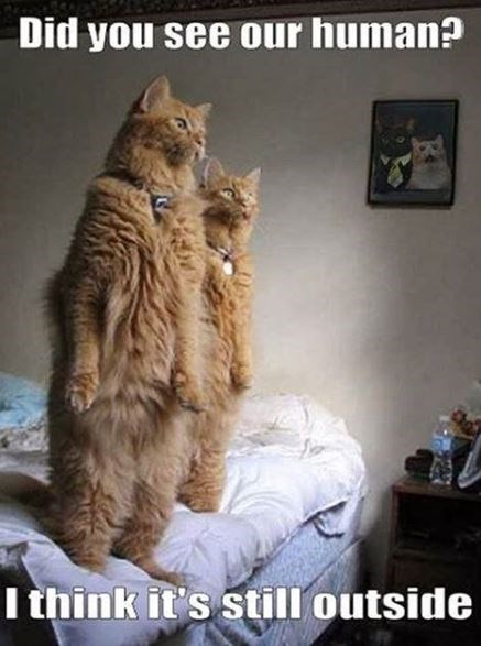 Cat - Did you see our human? I think it's still outside