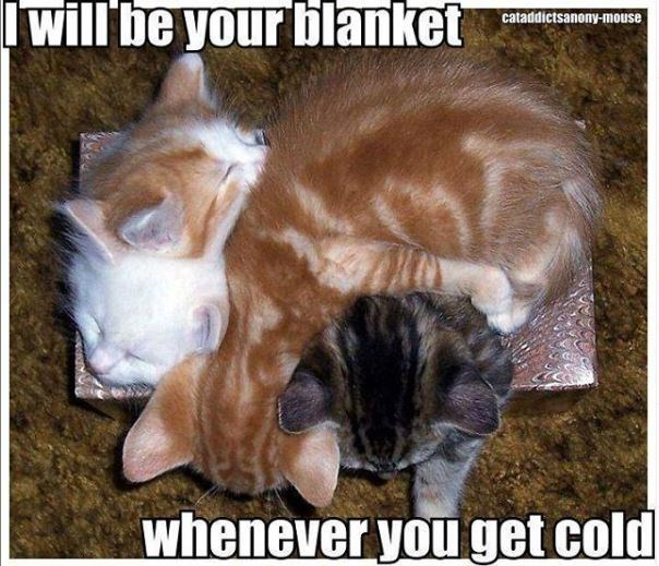 Photo caption - will be your blanket cataddictsanony-mouse whenever youget cold