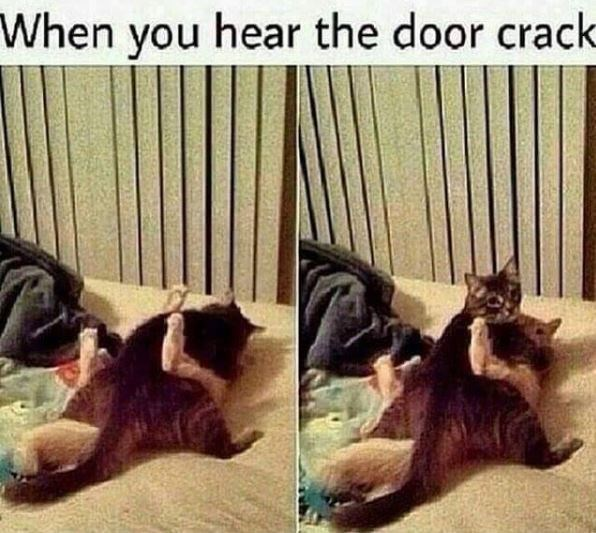 Cat - When you hear the door crack
