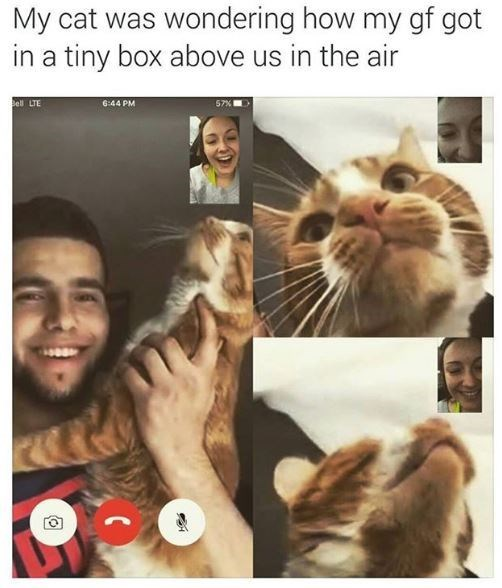 Cat - My cat was wondering how my gf got in a tiny box above us in the air Bell LTE 6:44 PM 57%