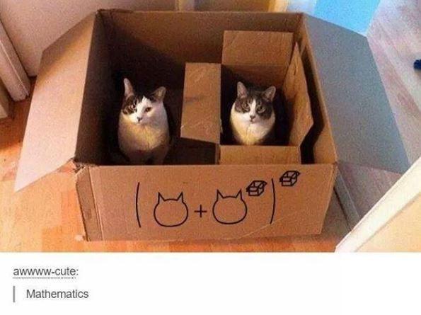 Cat - (8-09 awwww-cute: Mathematics