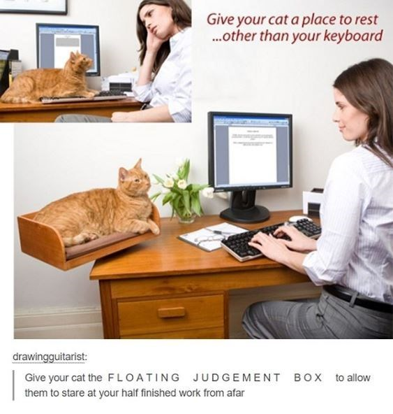 Product - Give your cat a place to rest .other than your keyboard drawingguitarist: Give your cat the FLOATING JUDGEMENT BOX to allow them to stare at your half finished work from afar