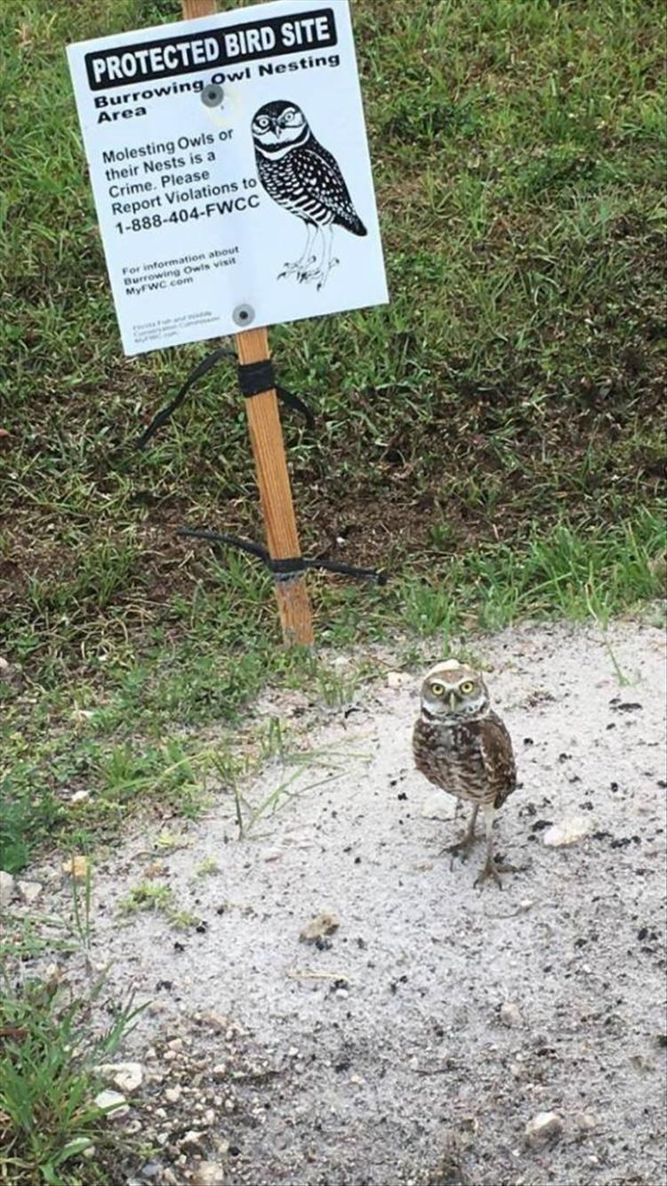 Bird - PROTECTED BIRD SITE Burrowing Owl Nesting Area Molesting Owls or their Nests is a Crime. Please Report Violations to 1-888-404-FWCC For information about urowing Owls visit MyFWC com