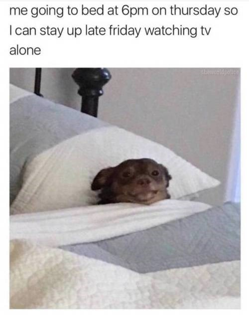 Dog - me going to bed at 6pm on thursday so I can stay up late friday watching tv alone 4heridpoll