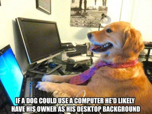 Dog breed - IFADOG COULDUSEACOMPUTER HED LIKELY HAVE HIS OWNERAS HIS DESKTOP BACKGROUND