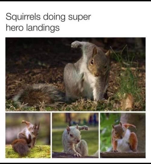 Squirrel - Squirrels doing super hero landings