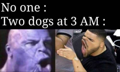 Nose - No one: Two dogs at 3 AM :