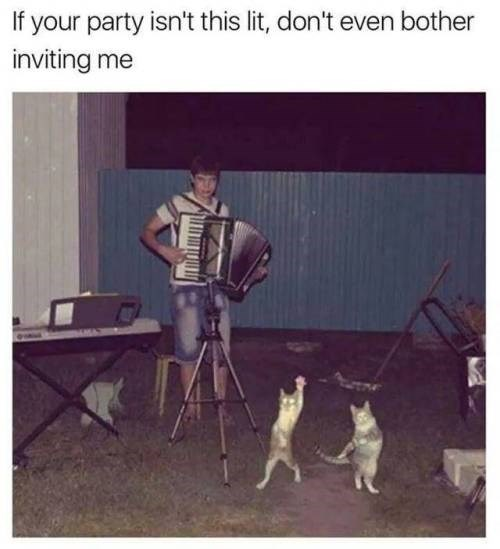 Canidae - If your party isn't this lit, don't even bother inviting me
