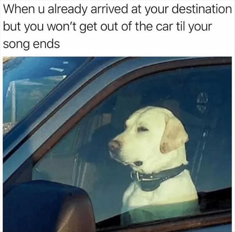 Dog - When u already arrived at your destination but you won't get out of the car til your song ends