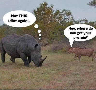 Terrestrial animal - Not THIS idiot again... Hey, where do you get your protein?