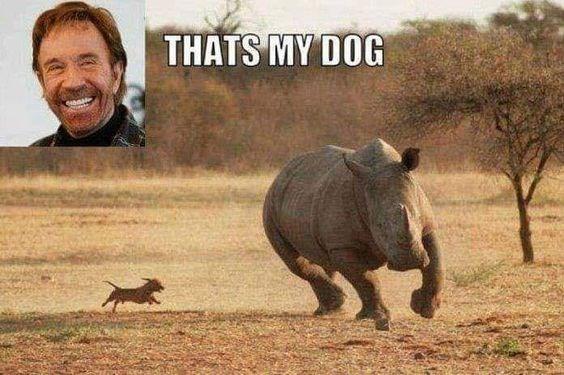 Terrestrial animal - THATS MY DOG