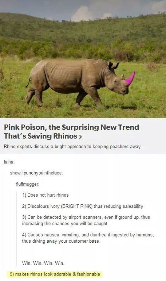 Rhinoceros - Pink Poison, the Surprising New Trend That's Saving Rhinos> Rhino experts discuss a bright approach to keeping poachers away lalna: shewillpunchyouintheface: fluffmugger 1) Does not hurt rhinos 2) Discolours ivory (BRIGHT PINK) thus reducing saleability 3) Can be detected by airport scanners, even if ground up, thus increasing the chances you will be caught 4) Causes nausea, vomiting, and diarrhea if ingested by humans, thus driving away your customer base Win. Win. Win. Win 5) make