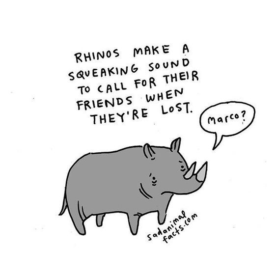 Text - RHINOS MAKE A SQVEAKING SOUND To CALL FOR THEIR FRIENDS WHEN THEY RE LOST Marco? dans.com Sadanimap
