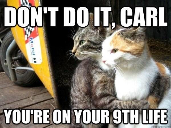 funny cat memes - 9361978368