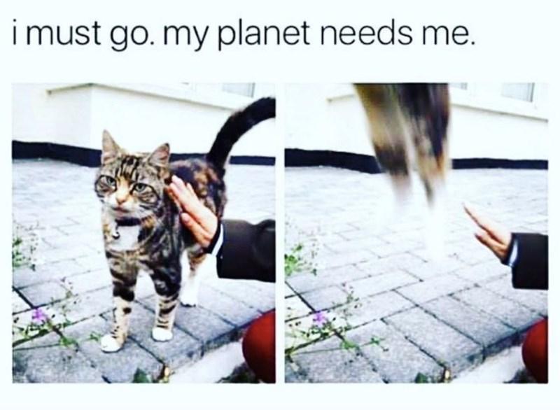 funny cat memes - 9361982720