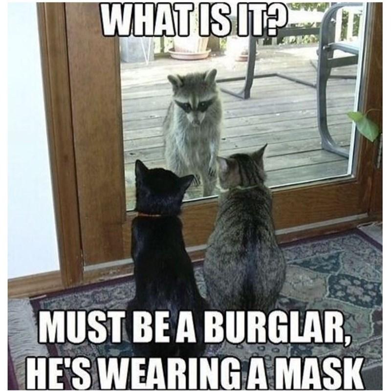 funny cat memes - 9361985280