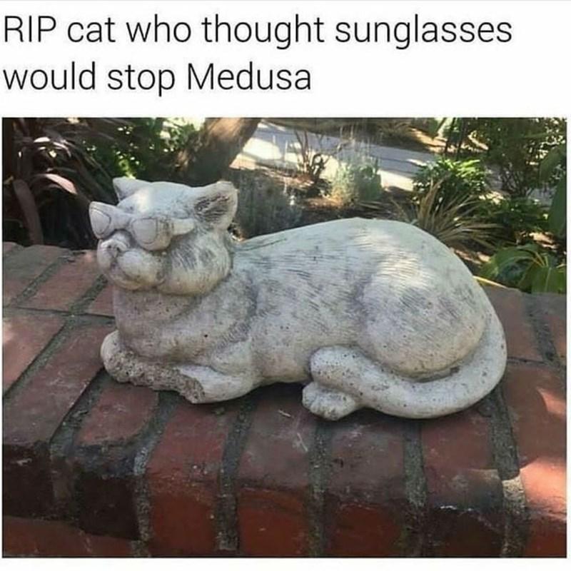 funny cat memes - 9362000128