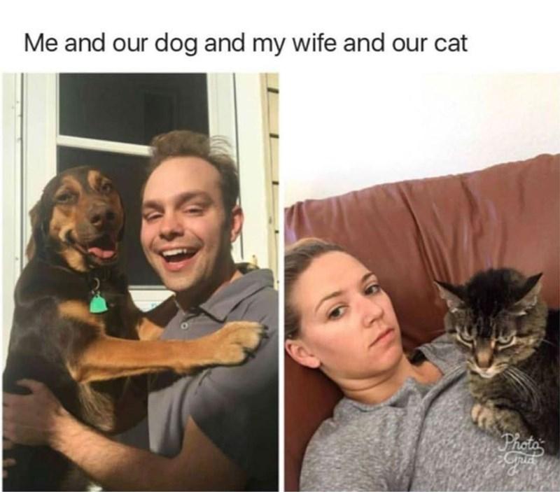 funny cat memes - 9362006272
