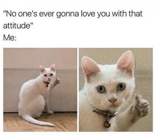 funny cat memes - 9362013440