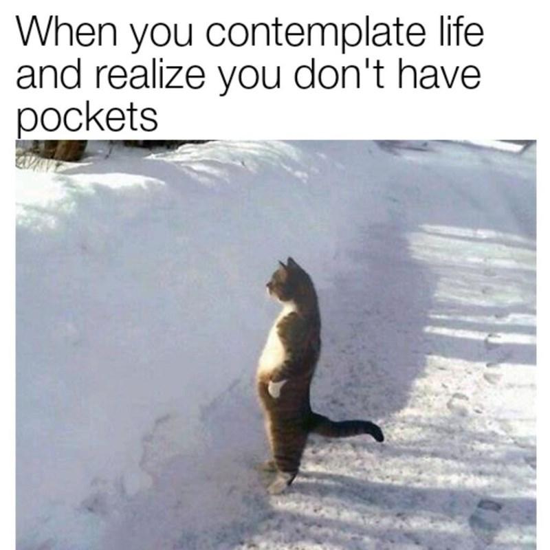 funny cat memes - 9362015744