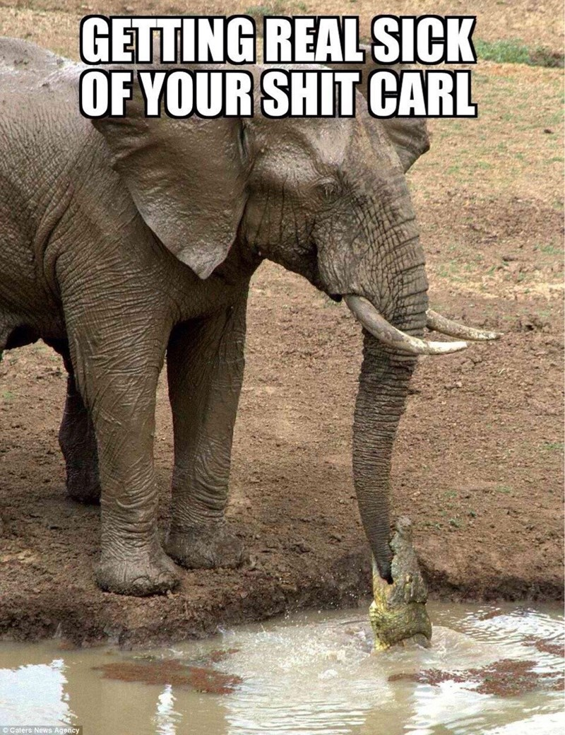 Elephant - GETTING REAL SICK OF YOUR SHIT CARL Caters News Agency