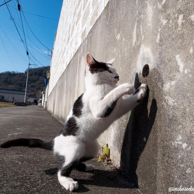 cat vs. shadow