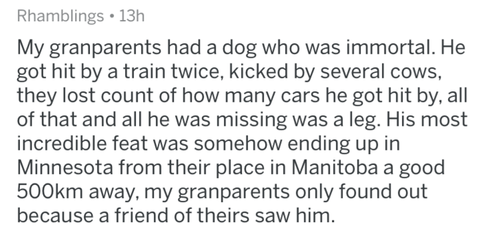 Text - Rhamblings 13h My granparents had a dog who was immortal. He got hit by a train twice, kicked by several cows, they lost count of how many cars he got hit by, all of that and all he was missing was a leg. His most incredible feat was somehow ending up in Minnesota from their place in Manitoba a good 500km away, my granparents only found out because a friend of theirs saw him.