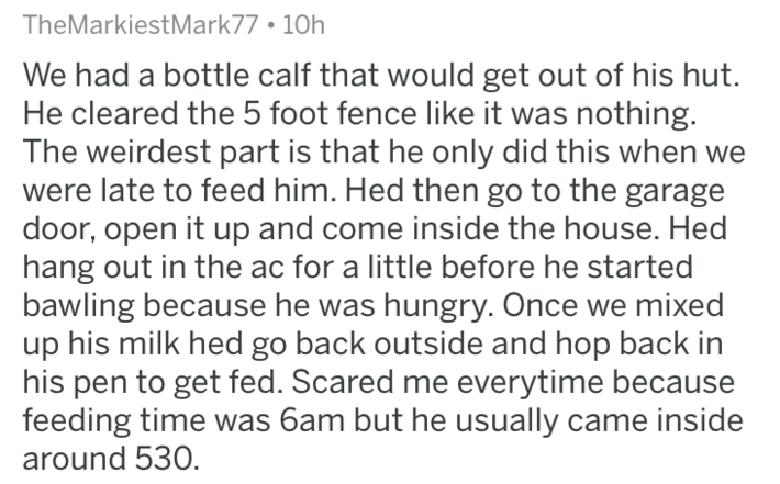 Text - TheMarkiestMark77 10h We had a bottle calf that would get out of his hut. He cleared the 5 foot fence like it was nothing. The weirdest part is that he only did this when we were late to feed him. Hed then go to the garage door, open it up and come inside the house. Hed hang out in the ac for a little before he started bawling because he was hungry. Once we mixed up his milk hed go back outside and hop back in his pen to get fed. Scared me everytime because feeding time was 6am but he usu