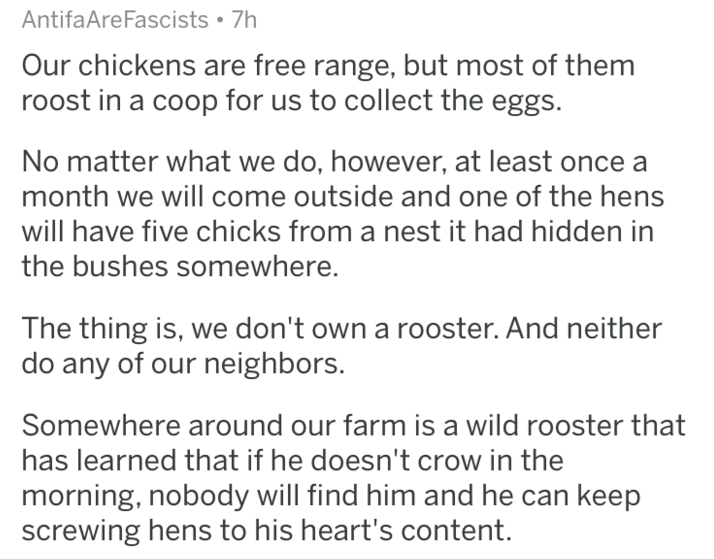 Text - AntifaAreFascists 7h Our chickens are free range, but most of them roost in a coop for us to collect the eggs. No matter what we do, however, at least month we will come outside and one of the hens will have five chicks from a nest it had hidden in the bushes somewhere. The thing is, we don't own a rooster. And neither do any of our neighbors. Somewhere around our farm is a wild rooster that has learned that if he doesn't crow in the morning, nobody will find him and he can keep screwing