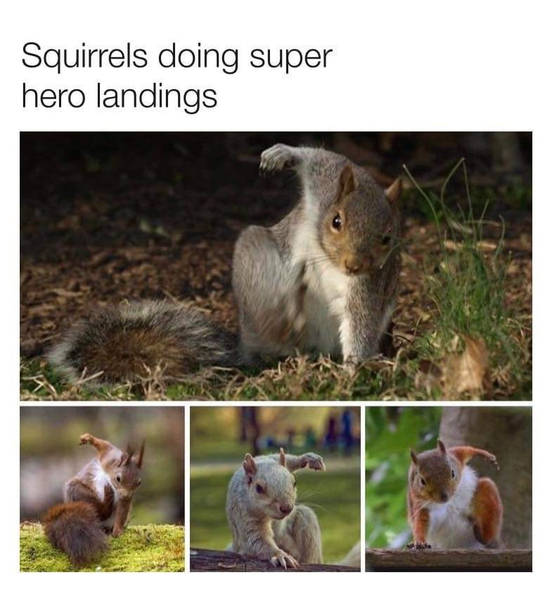 Squirrel - Squirrels doing super hero landings