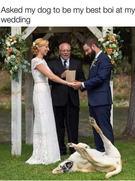 Wedding dress - Asked my dog to be my best boi at wedding my