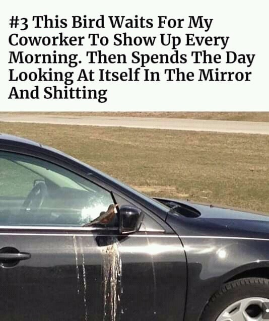 Vehicle - #3 This Bird Waits For My Coworker To Show Up Every Morning. Then Spends The Day Looking At Itself In The Mirror And Shitting