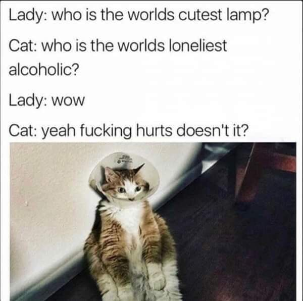 Cat - Lady: who is the worlds cutest lamp? Cat: who is the worlds loneliest alcoholic? Lady: wow Cat: yeah fucking hurts doesn't it?