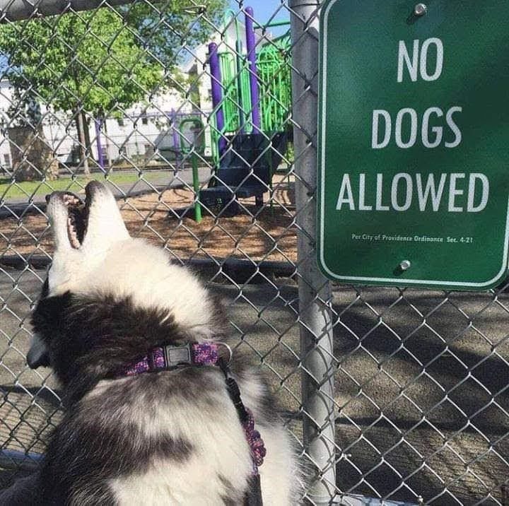 Canidae - NO DOGS | ALLOWED Per City of Providence Ordinance Sec 4-2