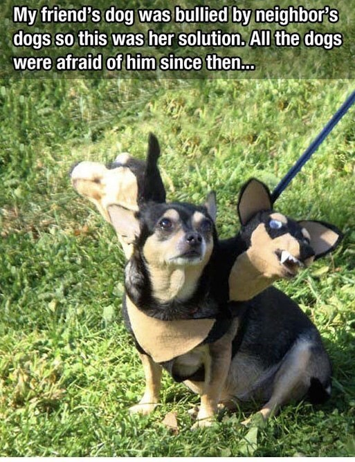 Text - Dog breed - My friend's dog was bullied by neighbors dogs so this was her solution. All the dogs were afraid of him since then...