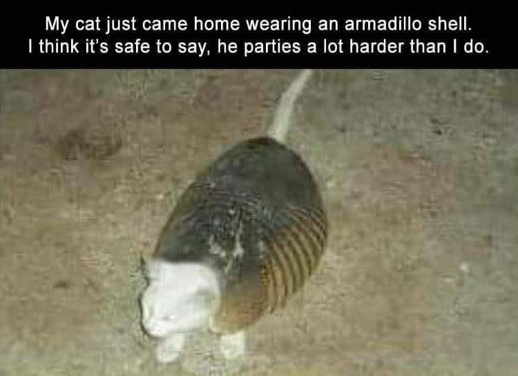 Organism - My cat just came home wearing an armadillo shell. I think it's safe to say, he parties a lot harder than I do.