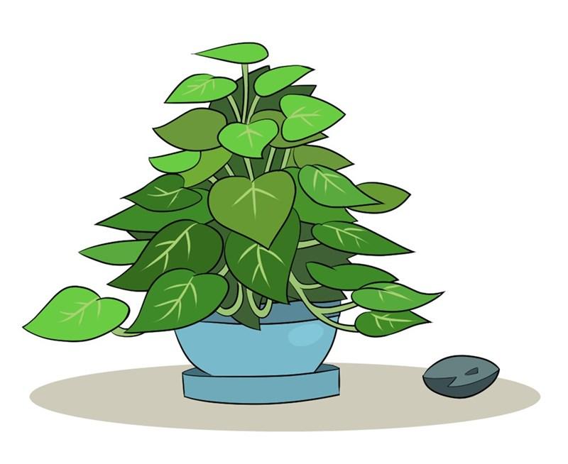 boulder phyllis mew-me - 9363061760